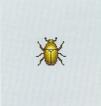 Tutti gli insetti Dorife10