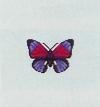 Tutti gli insetti Farfal10