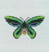 Tutti gli insetti Farfal11
