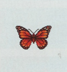 Tutti gli insetti Farfal14