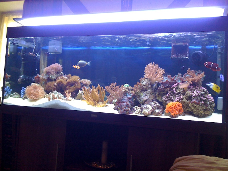 my 5ft 400 ltr reef tank 01217