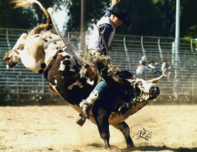 Bull Riding 2d11