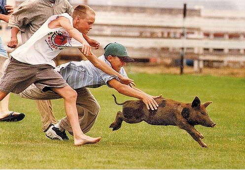 Pig Chase 2e11