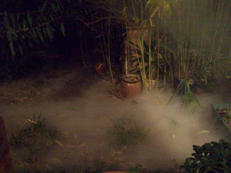 brouillard de marais 114_0110