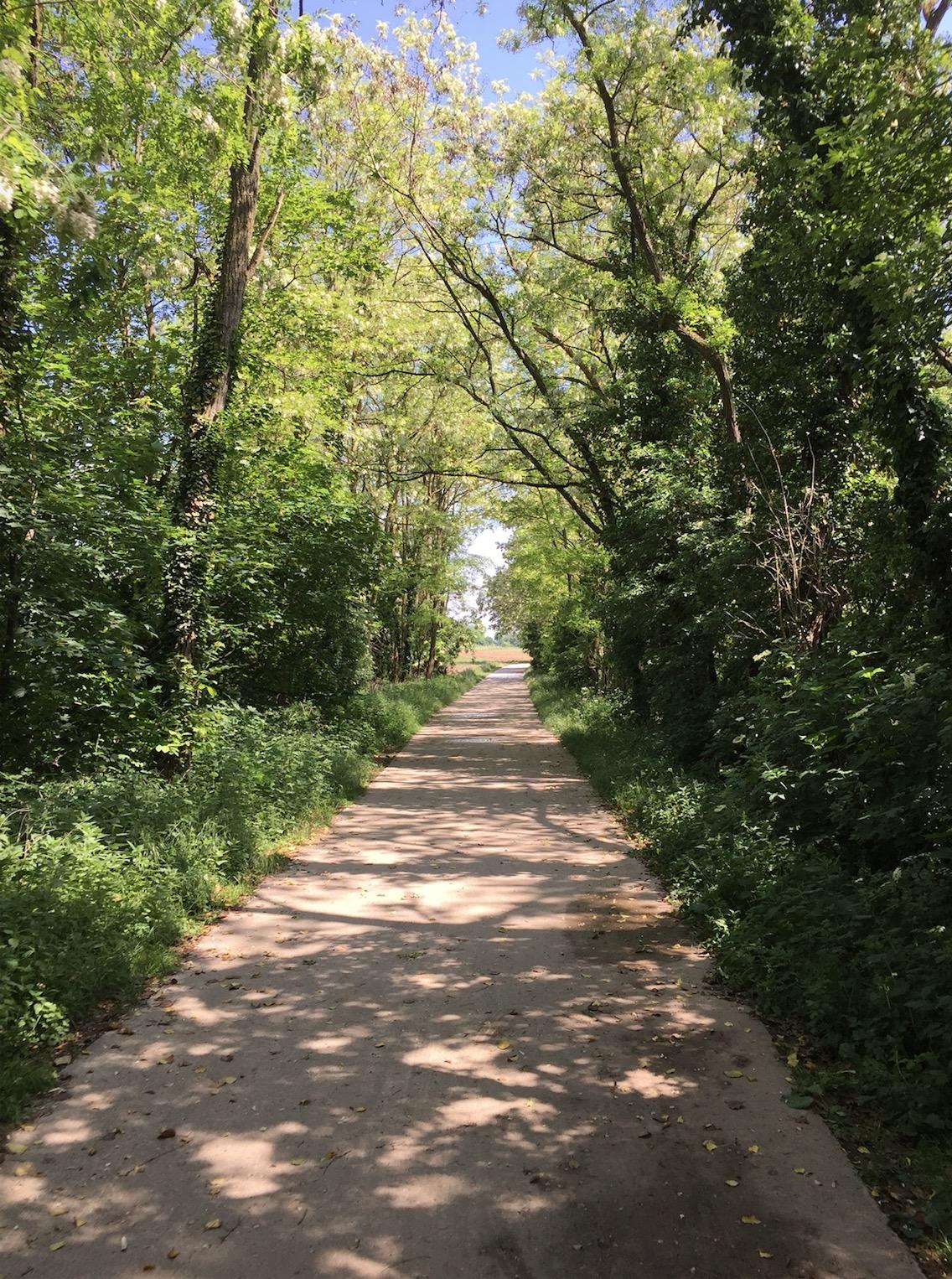 85km à Vélo : La Piste des Forts à Strasbourg B_710