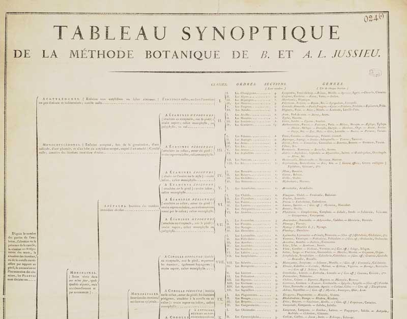 Le jardin botanique de Louis XV au Petit Trianon 024-1g10