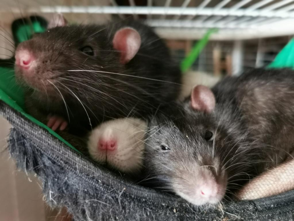 3 mâles à l'adoption 1 an.  Vaucluse (84) Img_2020