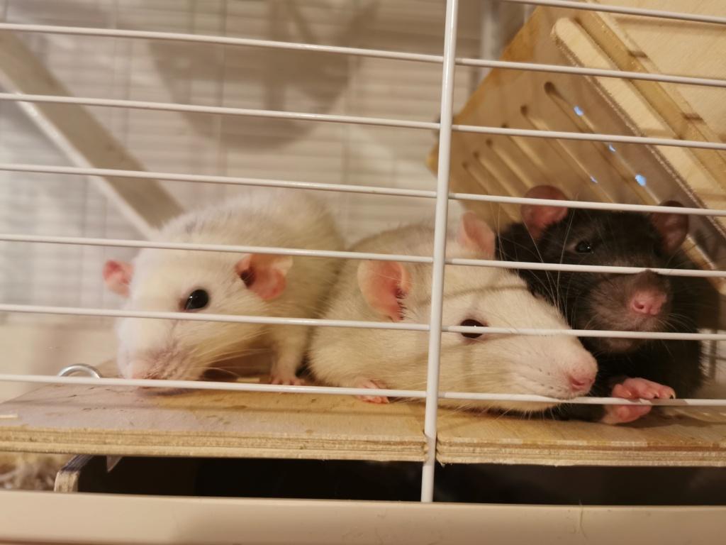 3 mâles à l'adoption 1 an.  Vaucluse (84) Img_2023