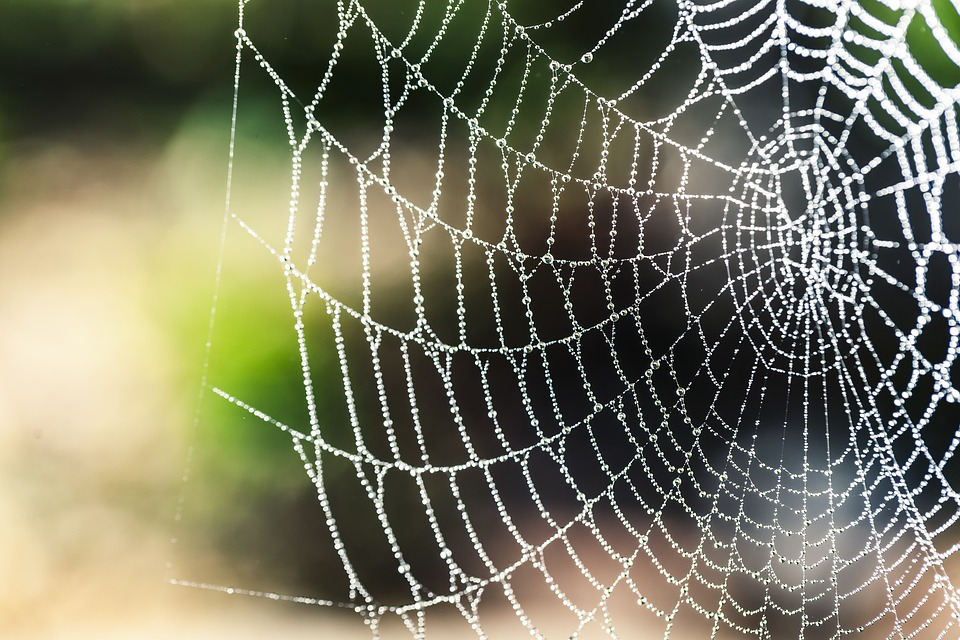 Natural News - Spider species discovered to use catapult technology to fling sticky webs at prey… previously scientists believed only humans possessed such weapons tech Spider10