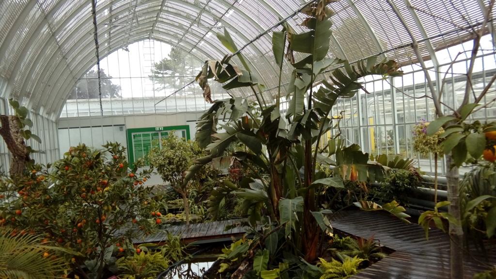 réouverture des serres du jardin des plantes de Rouen 20190513