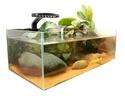 axolotls bientôt disponibles  Kit-de11