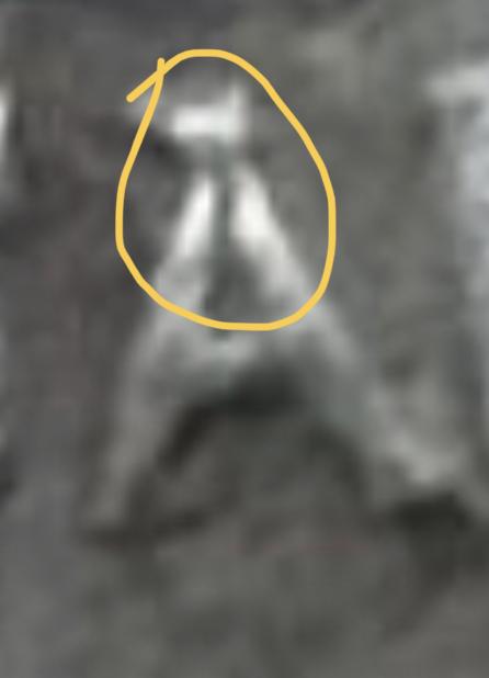 Denario de Julio Cesar. CAESAR. Elefante. Ceca movil  D4e58310