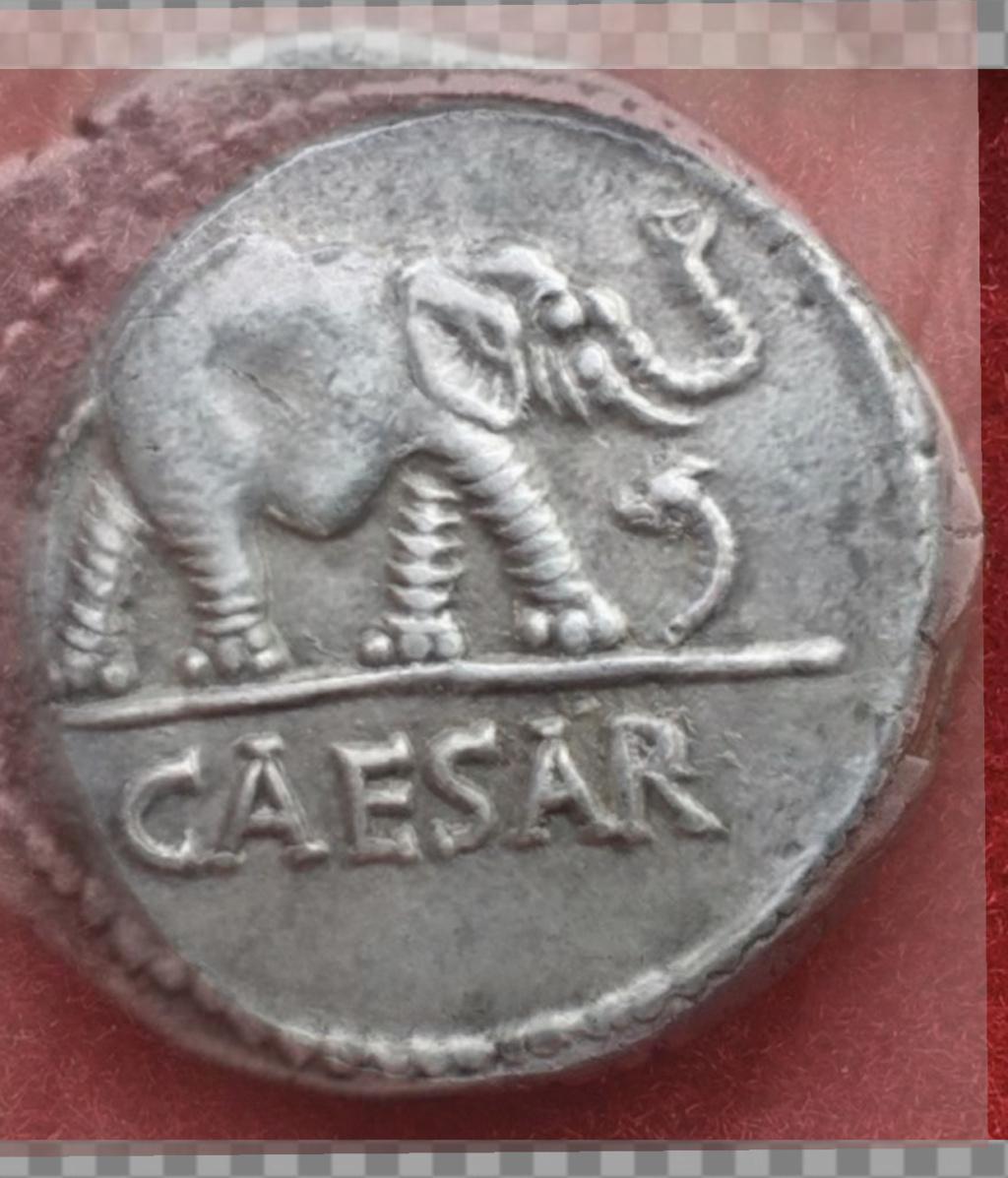 Denario de Julio Cesar. CAESAR. Elefante. Ceca movil  D61fd310