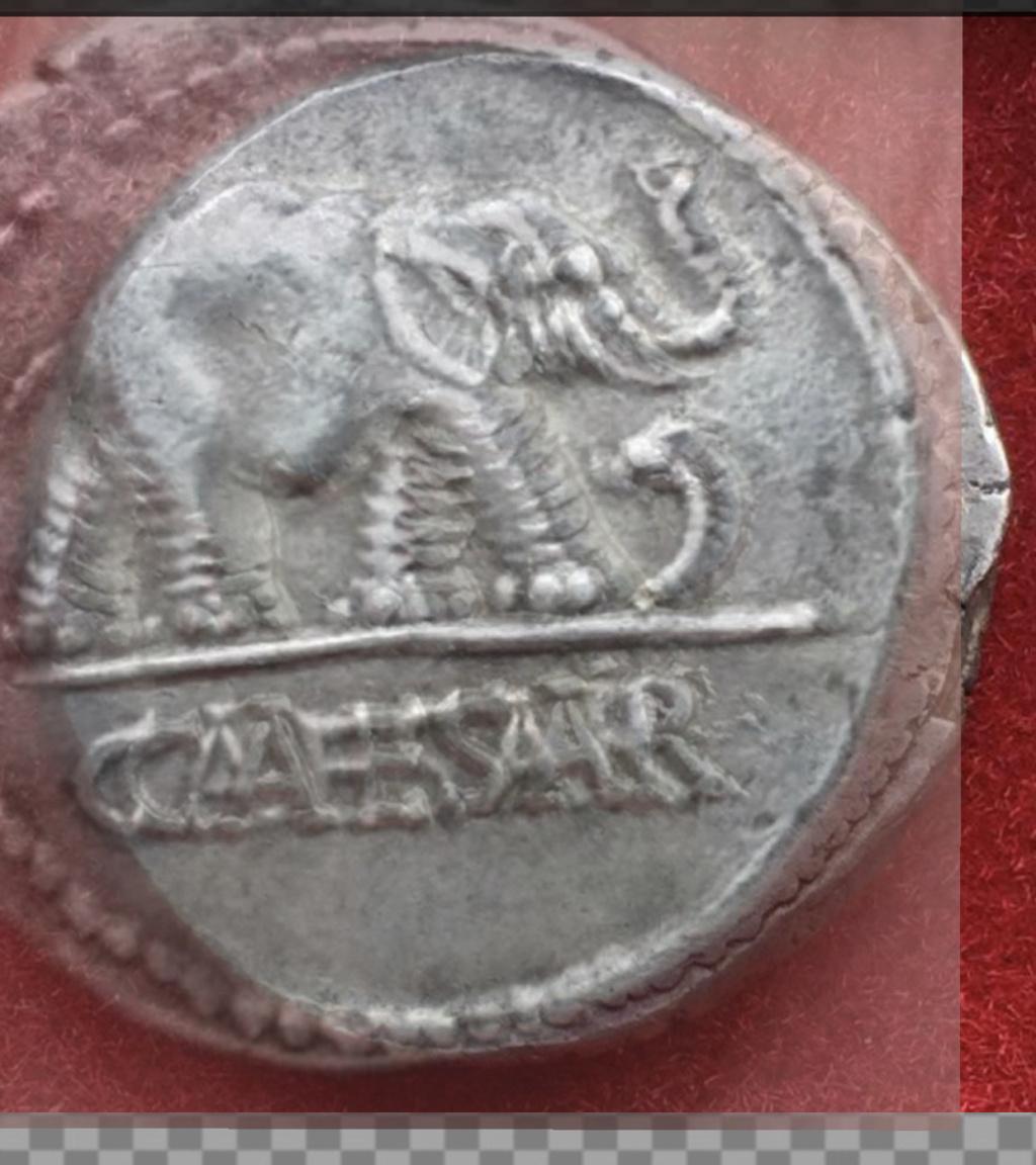Denario de Julio Cesar. CAESAR. Elefante. Ceca movil  Fe458410