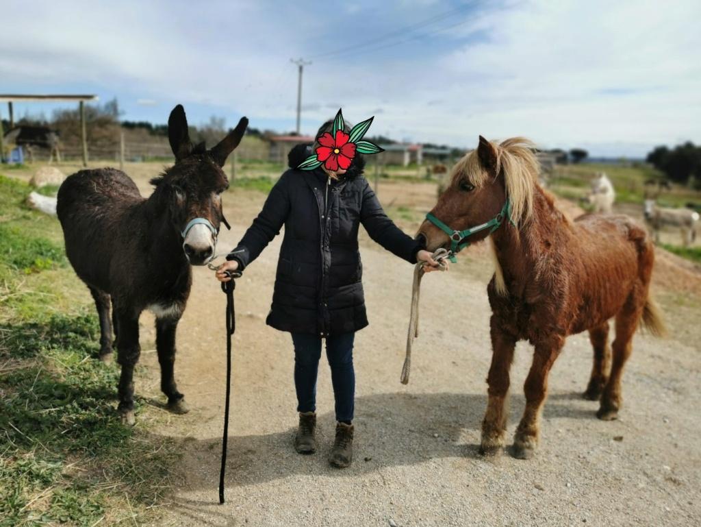 FADETTE ET FRIMEUR, Ane et poney depart 61.... Pris en charge par l'Association Caramel !!!! 20210320