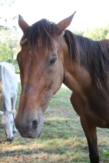 MISS, PS de 21 ans sauvée grâce à clic animaux et ses bienfaiteurs !! Img_9424
