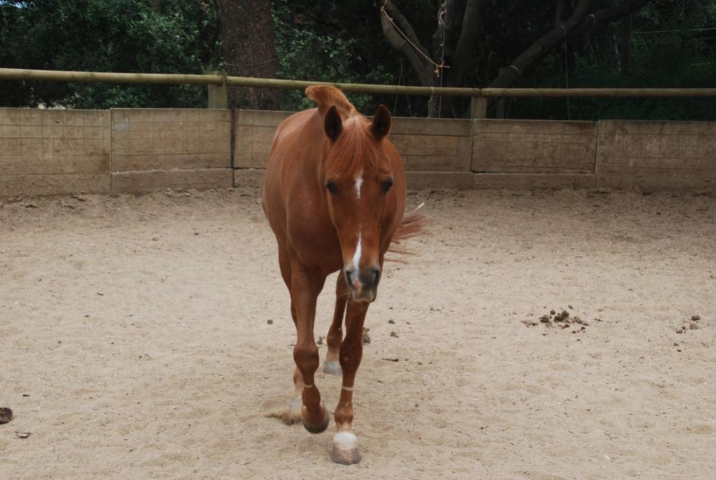 mon poney que j'ai en dp 34323911