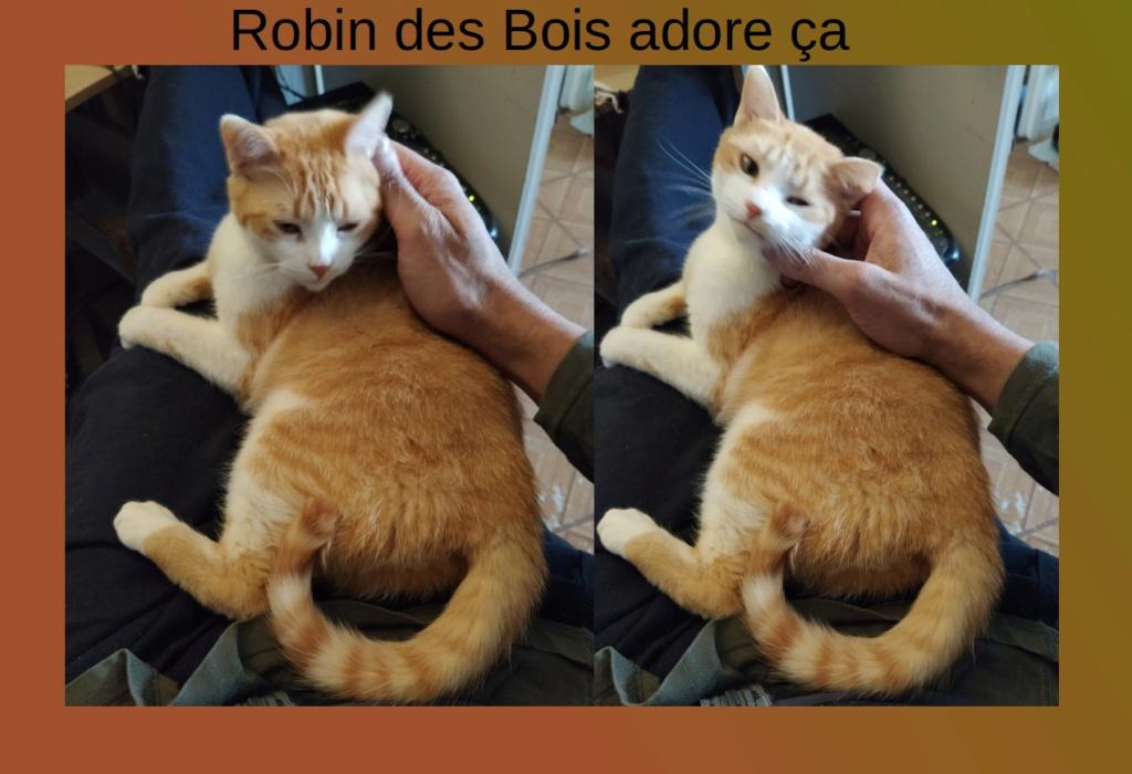 ROBIN DES BOIS Caress10