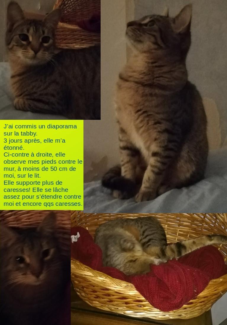 CINDYA (CINDYCAT - CINDYRELLA) Cindya11