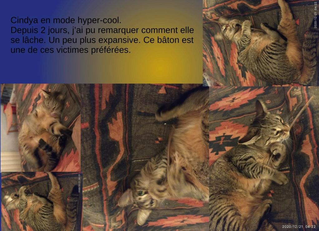 CINDYA (CINDYCAT - CINDYRELLA) - Page 2 Cindya24