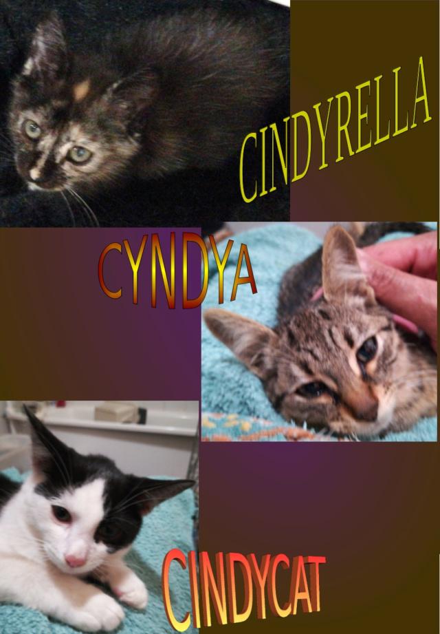 CYNDIA CINDYRELLA CINDYCAT Przose10
