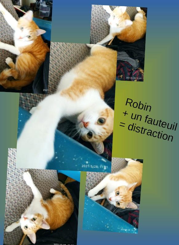 robin - ROBIN DES BOIS  Rob-vs10