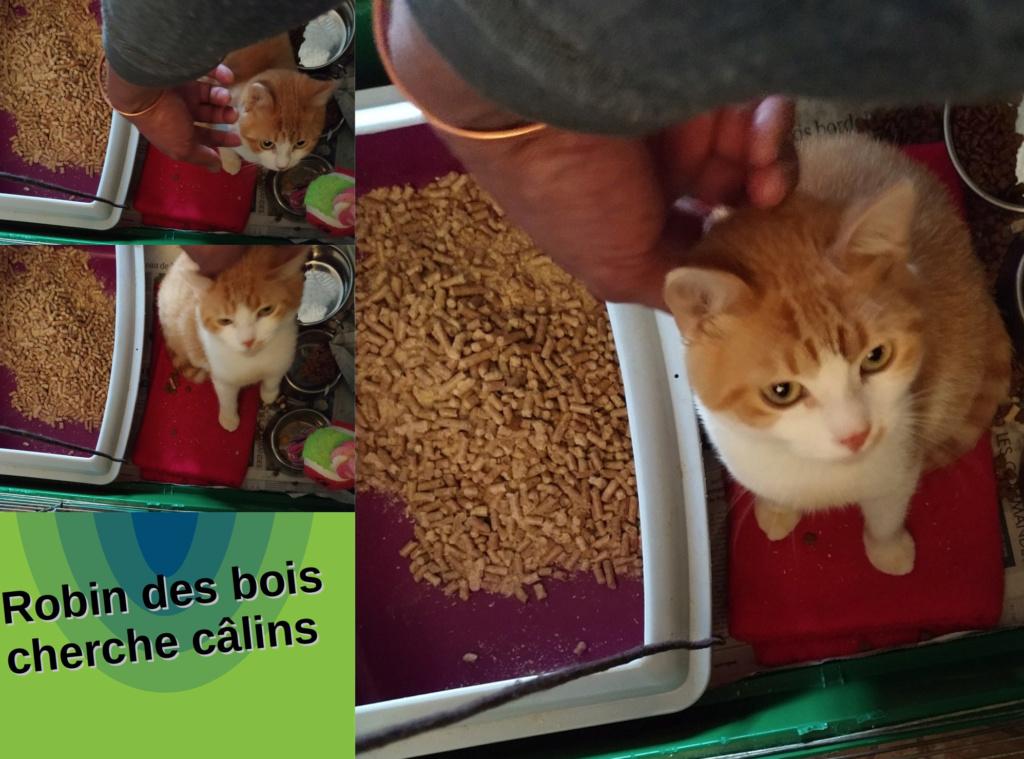 ROBIN DES BOIS Robdbo11