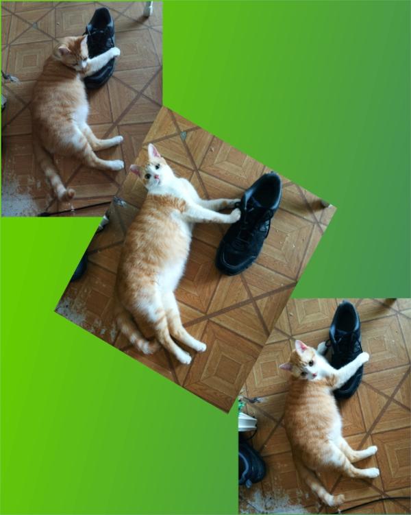 ROBIN DES BOIS Shoe-v11