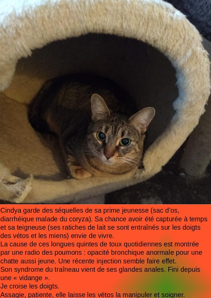CINDYA (CINDYCAT - CINDYRELLA) - Page 2 Vzoto-10