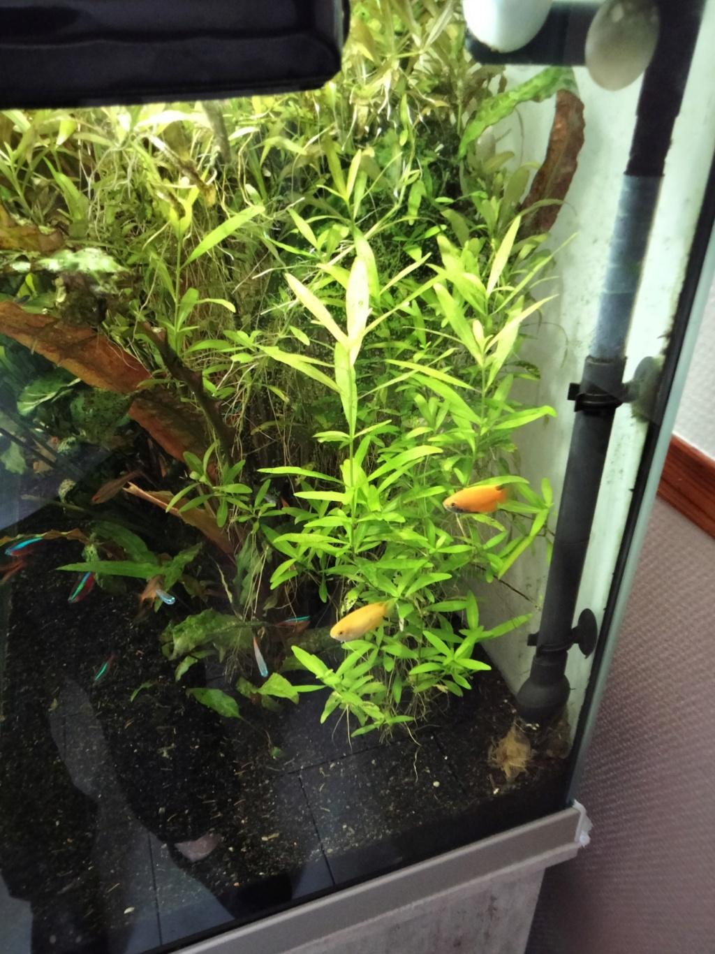 Choix aquarium : ça sera un juwel Rio 350  - Page 2 Img20214