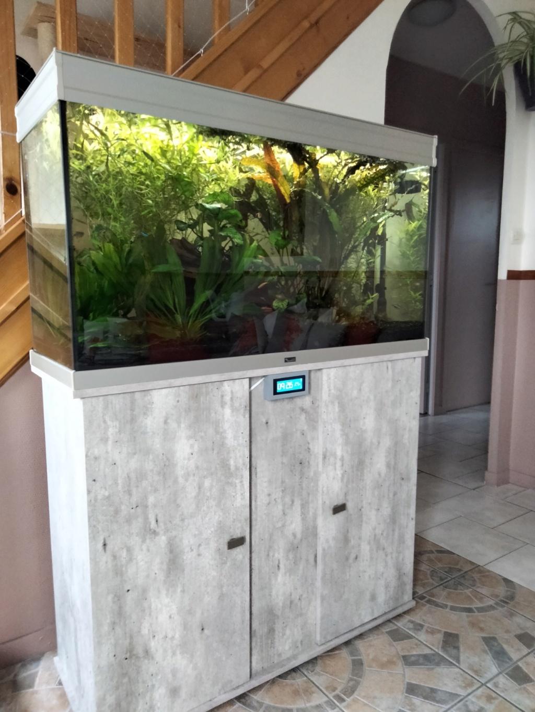 Choix aquarium : ça sera un juwel Rio 350  - Page 3 Img20215