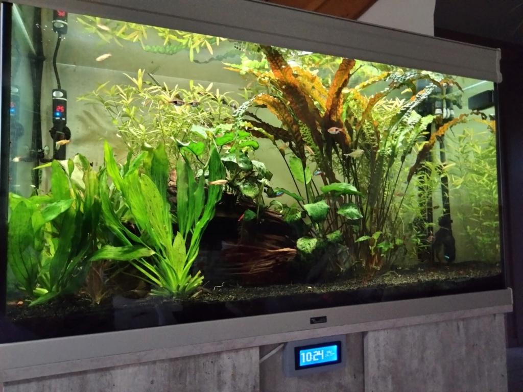 Choix aquarium : ça sera un juwel Rio 350  - Page 3 Img20216