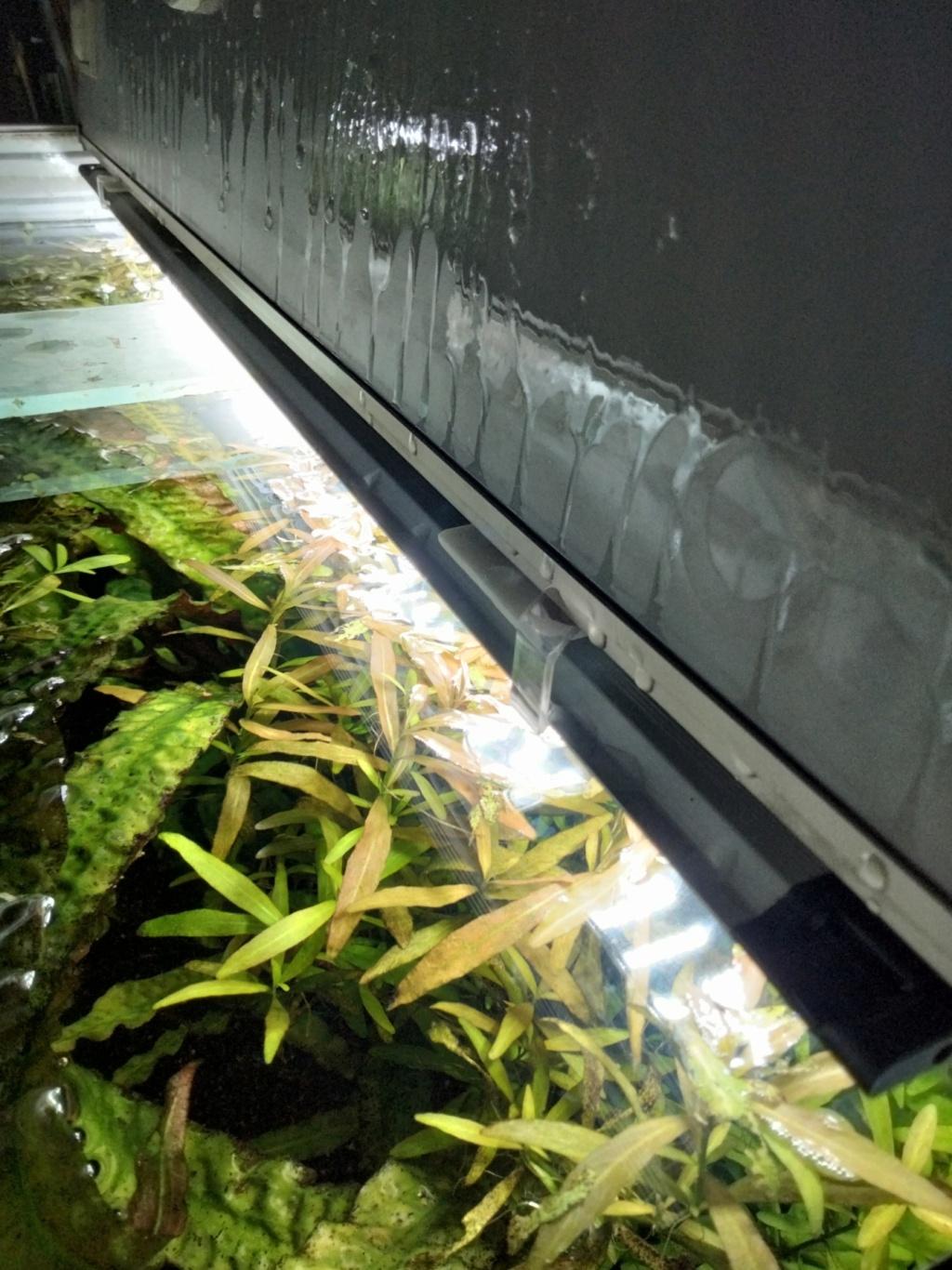 Choix aquarium : ça sera un juwel Rio 350  - Page 3 Img20219