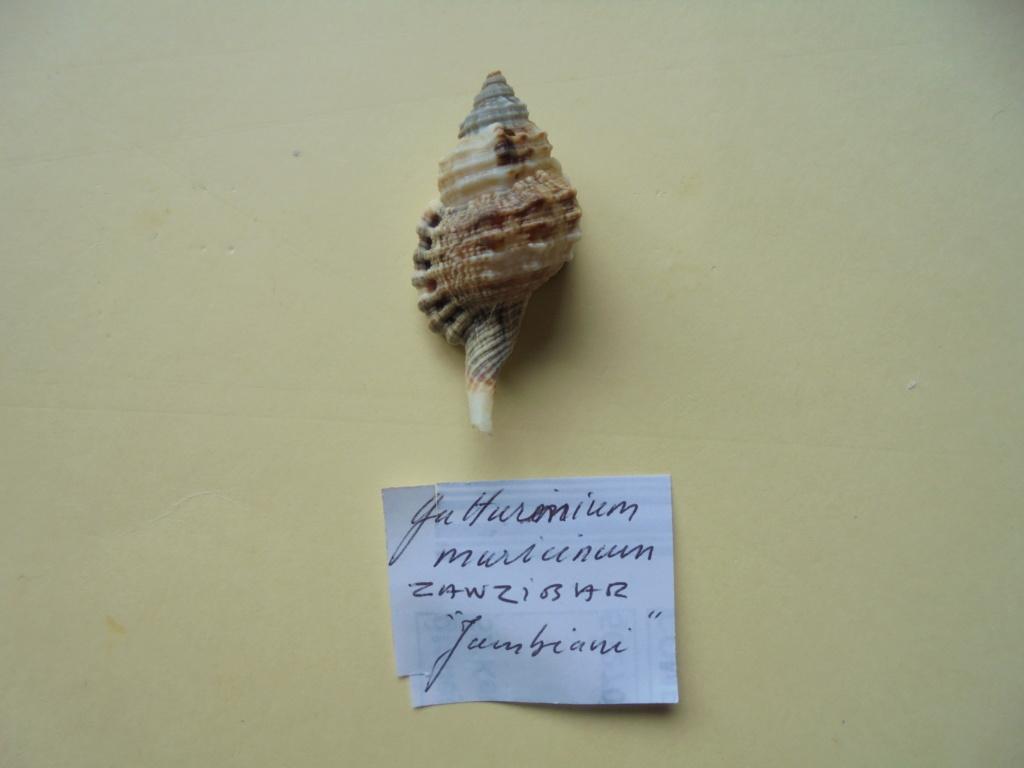 Pêche à Zanzibar Dsc02114