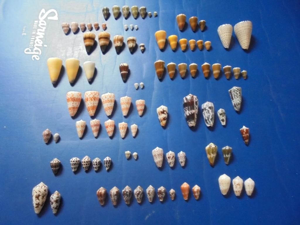 Pêche à Zanzibar - Page 2 Dsc02310