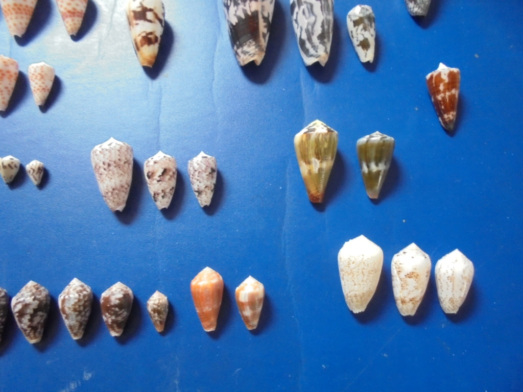 Pêche à Zanzibar - Page 2 Dsc02312