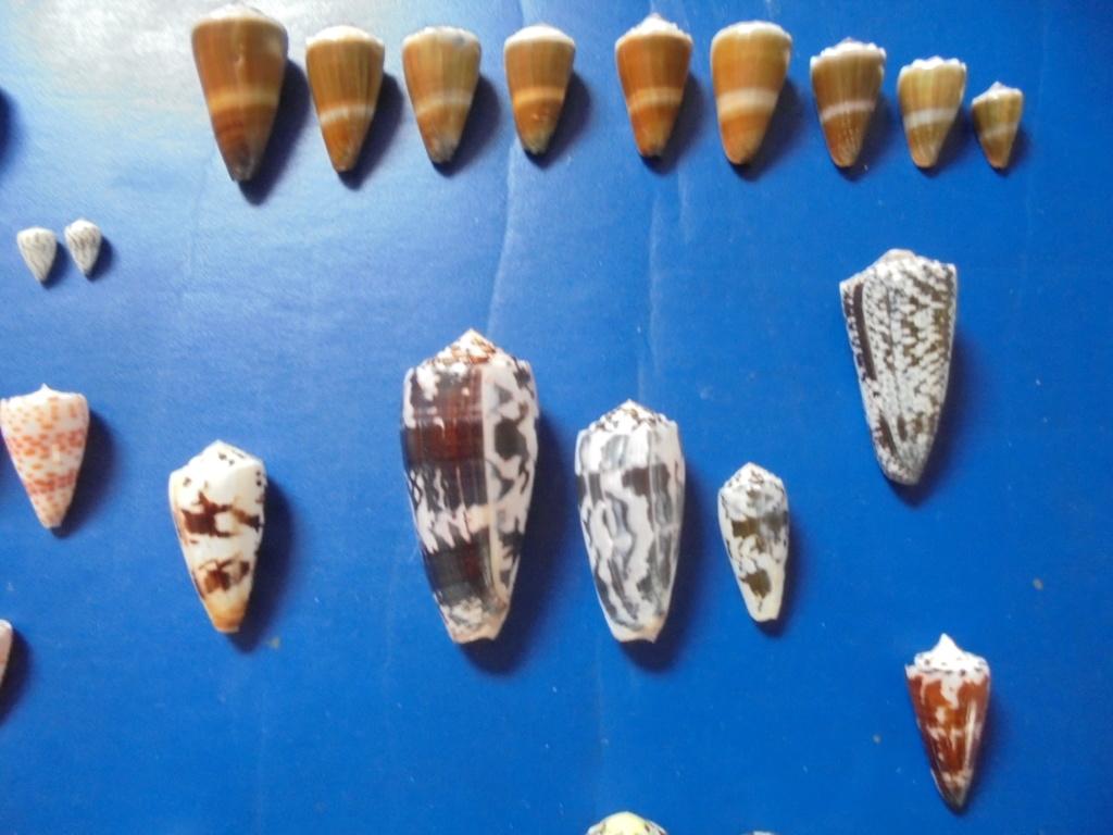 Pêche à Zanzibar - Page 2 Dsc02313
