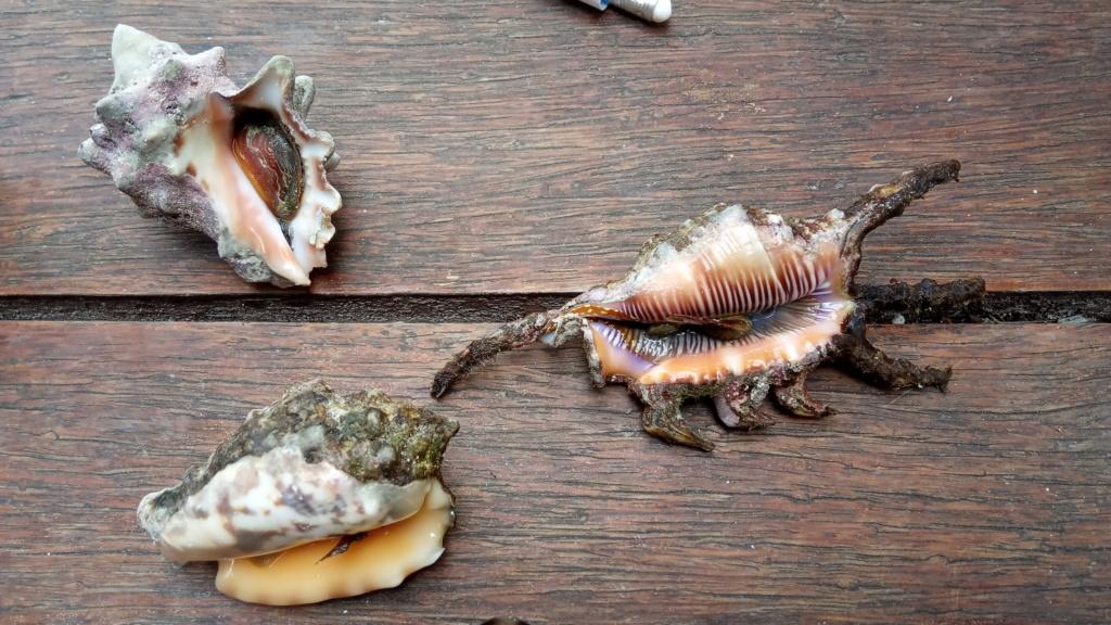 Pêche à Zanzibar Jambia18