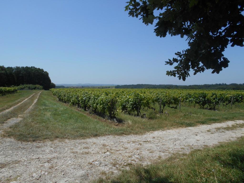 Entre Grande et Petite Champagne Dscn1618
