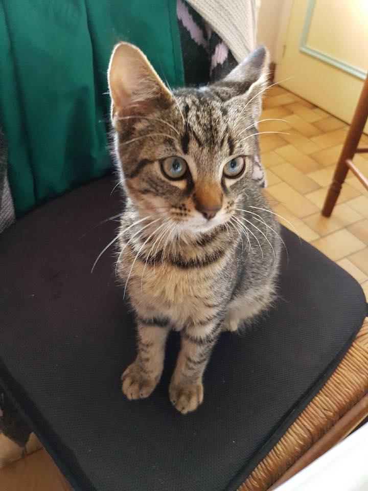 URGENT : COVOIT ST-GERMAIN-DU-PINEL vers LORIENT pour un chaton 37106210