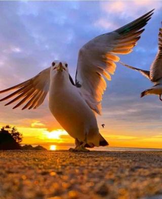 L'Oasis de non amis - Portail* Oiseau13
