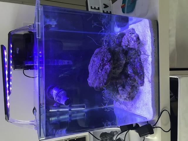 Mon nano reef Nano_r11