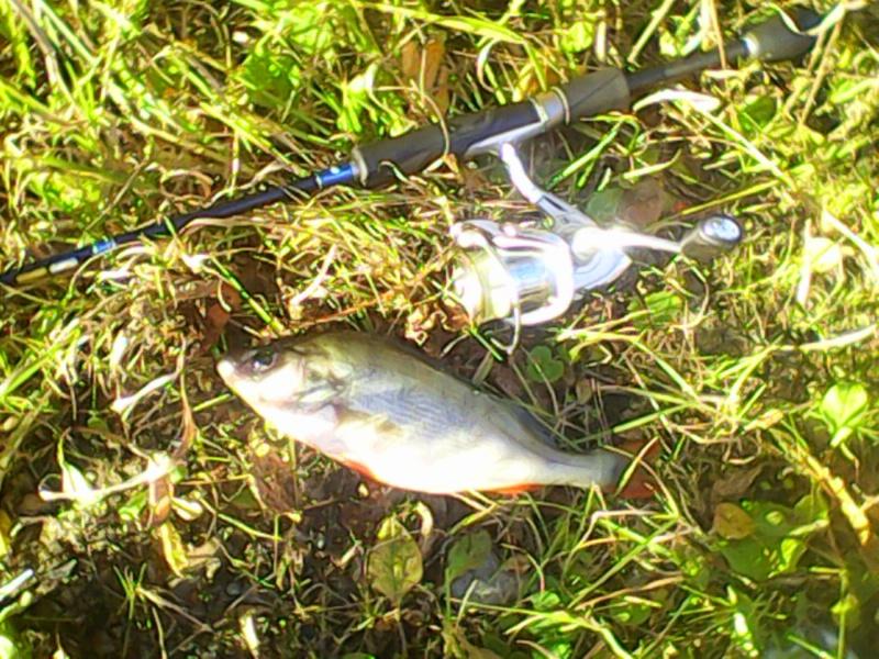 Отчёты о рыбалках - Страница 33 Img02011