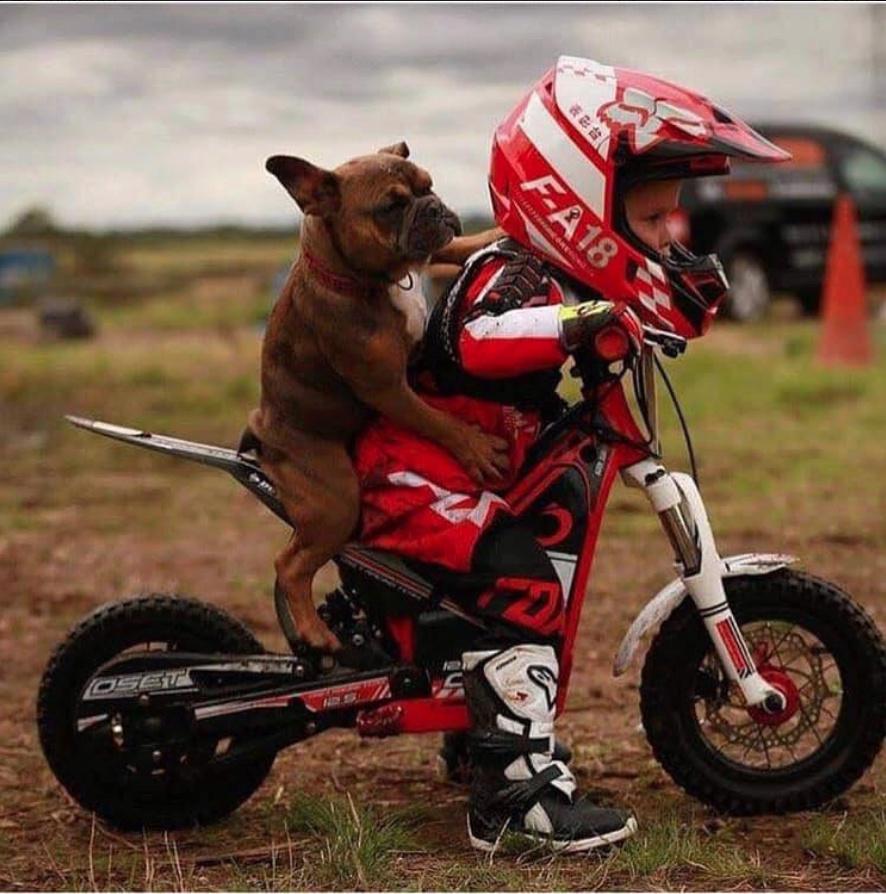 Humour en image du Forum Passion-Harley  ... - Page 29 Capt1570