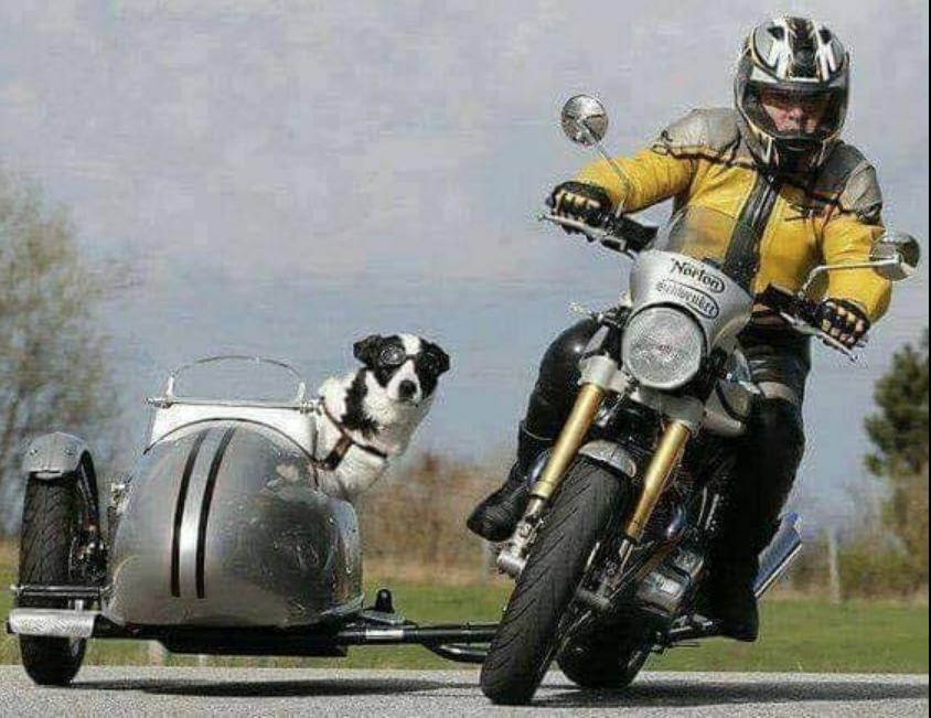 Humour en image du Forum Passion-Harley  ... - Page 29 Capt3989