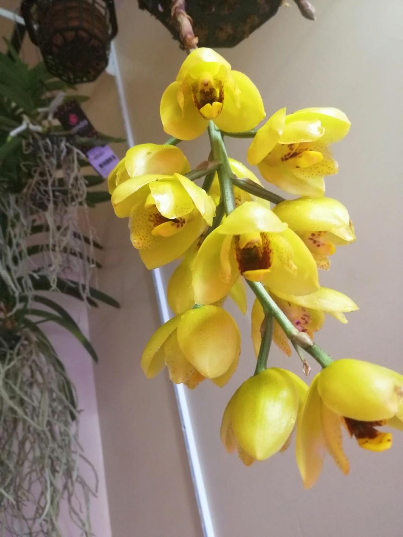 voici mes n'orchidée dans mon phytotron Img_2018
