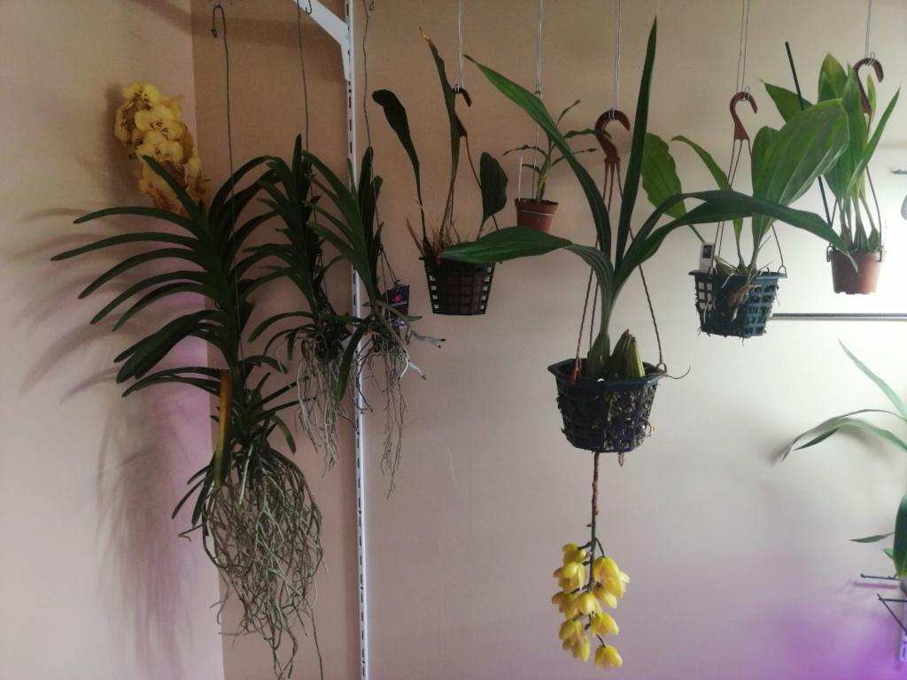voici mes n'orchidée dans mon phytotron Img_2028
