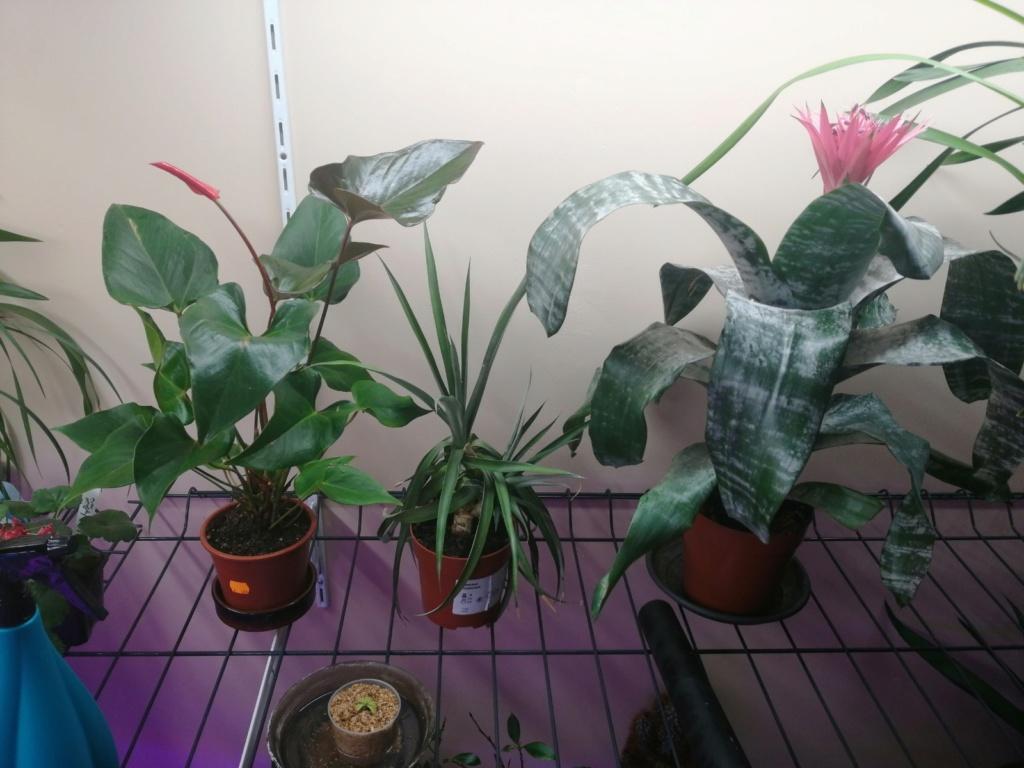 voici mes n'orchidée dans mon phytotron Img_2031