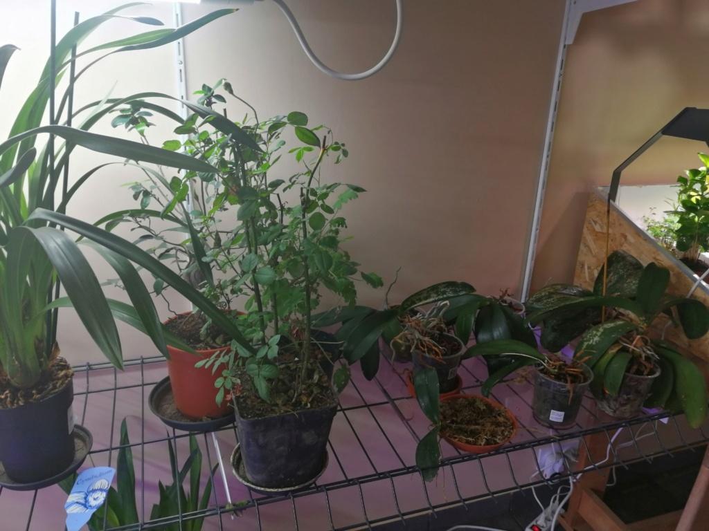 voici mes n'orchidée dans mon phytotron Img_2032