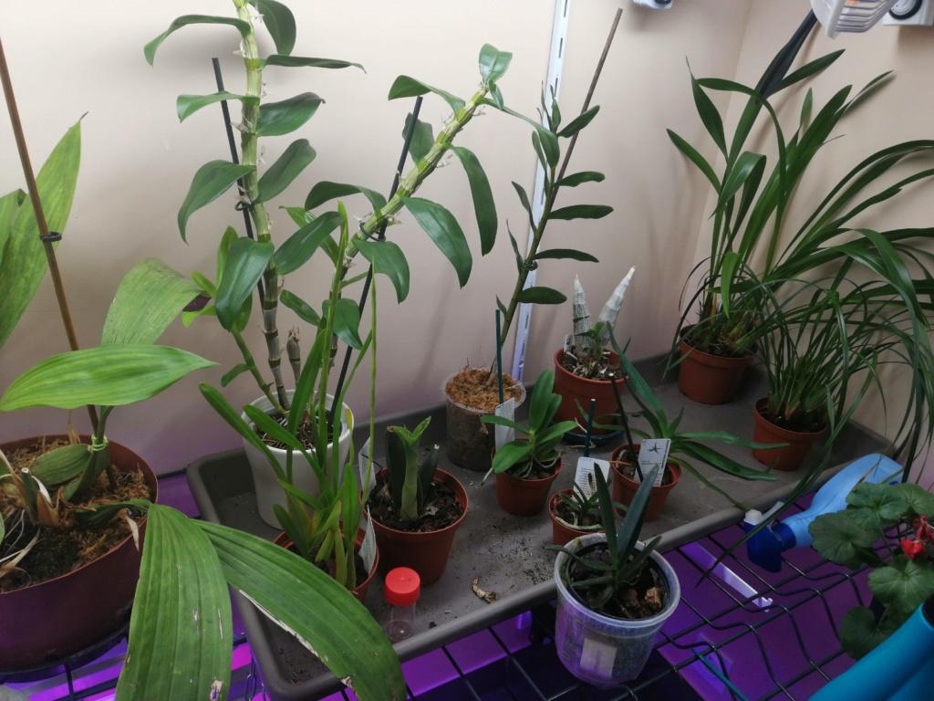 voici mes n'orchidée dans mon phytotron Img_2033